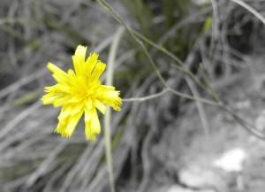flora-e-vegetazione-4