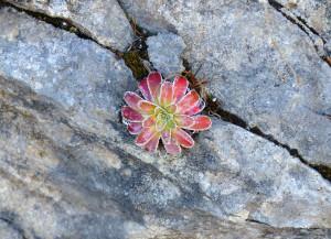 flora-e-vegetazione-5
