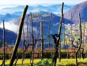 paesaggio rurale a Caluga