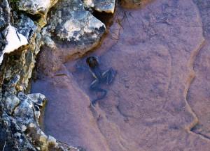 rana in ambiente carsico: una rarità