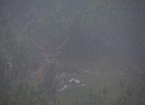 maschio adulto nella nebbia